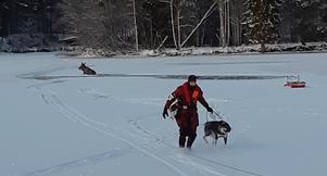 Lyckligt slut när räddningstjänsten gjorde en heroisk insats och räddade både älg och hund upp ur isvak. Foto: Räddningstjänsten