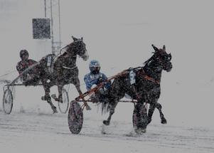 Rikard Skoglund befäste fjärdeplatsen i allsvenska körsvensligan genom segern med Linvesta Vivant. Bild: Mats Persson
