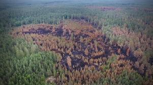 Daniel Lingblom har fångat förödelsen i skogen med sin drönare.
