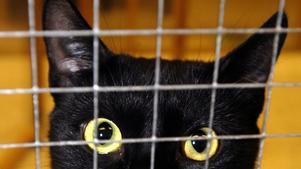 Enligt länsstyrelsen har inte mannen ansökt om tillstånd för att få fler än nio katter, han uppfyller inte heller kraven för att få ett sådant tillstånd.