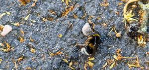 Vissa bin ser man lever och ligger och ser lealösa ut. – Man vill ju inte att de ska lida, säger Agnes Norlén.