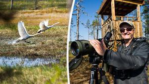 I Västernorrland finns många värdefulla våtmarker att värna. Inte bara för biologer som Tomas Birkös skull utan också för att de kan skydda mot både översvämningar och torka. Arkivbilder: Leif Wikberg