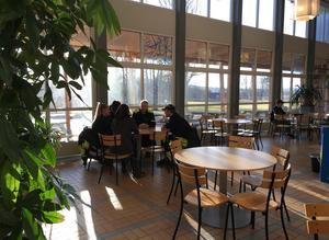 Cafeterian på Stiernhöök. Skolan har sina rötter i Mora folkhögskolas lantbruksutbildning som initierades av Anders Zorn 1907. 1955 flyttades utbildningen till Rättvik och hade då 30 elever. 1995 fick skolan flera tillbyggnader och idag studerar här runt 500 elever.