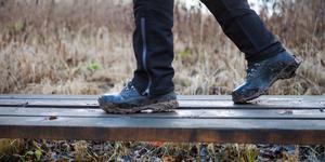 """""""Sverige ska naturligtvis fortsätta vara en ledande skogsindustrination. Men genom att skapa ett bredare mångbruk av skogarna kan de sammanlagda inkomsterna öka"""" skriver debattörerna. Foto: Robin Haldert/TT"""