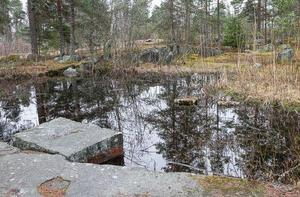 Groddjursinventeringen hittade inte några salamandrar. Ett groddjur som det fanns gott om på platsen för 30 år sedan.  Bilden är från det nedlagda stenbrottet som ligger en bit öster om planområdet.