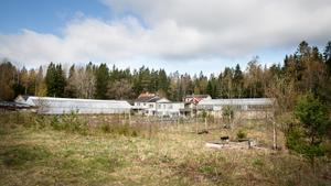 Här, på den gamla trädgårdsmästartomten i Ekgården, vill William group bygga 66 nya bostäder. Kommunen vill avvakta med besked tills en helhetsplan för Brunnsäng-Ritorp är klar.