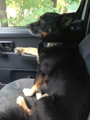 Hunden Oscar.