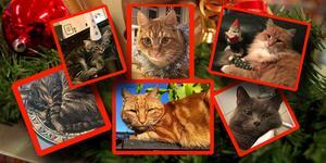 Än finns det tid att nominera sin katt! Senast den 3 december vill vi ha din anmälan. Det här är några av de katter som är nominerade till