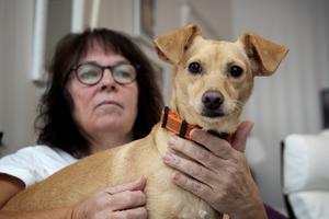 Idag är Molly en helt annan hund och kontakten med matte Janet Johansson är tydlig. Finns matte med så är ingenting farlig, inte ens fotografen med sin stora kamera.