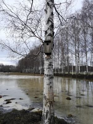 Vassjön - Sör Amsberg - Borlänge, tagna den 27 februari. Det är isigt än och det dröjer nog ett tag till innan vårfåglarna kommer, men sedan blir det full fart här. Hälsningar kommer från Maj Wikström som tagit bilden.