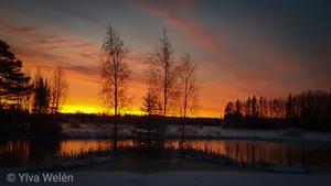 Var tvungen att stanna på väg hem från nattjobbet, en morgon i början av december! Solen hade inte synts till på länge och den bjöd på en fin soluppgång! Foto: Ylva Welén