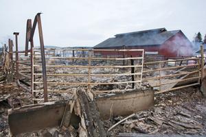 Här stod 35-40 djur när branden startade. Samtliga kunde räddas undan lågorna.