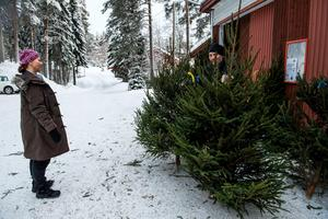 Sabine Robé från Domsjö granskar alla granar noga innan hon kan bestämma sig.