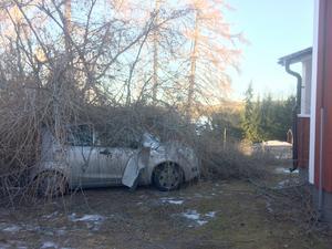 Ett stort lärkträd blåste ned på Arvid Nordhs bil, med trädtoppen bara någon meter från huset. Bild: Privat