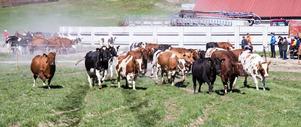Med coronapandemin och hotad biologisk mångfald som ursäkter föreslår kommissionen nu detaljstyrning av flera områden som rör naturvård och lantbruk, skriver Sverigedemokraterna.