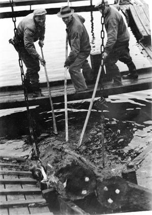 Sista stocken går in i sågen vid Träkol innan nedläggningen 1962.