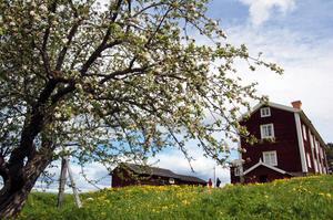 Kanske dyker hon upp på Bingsjöstämman - Danielsgården i Bingsjö är en raritet som Lena Krånglin nu har ett ansvar för.
