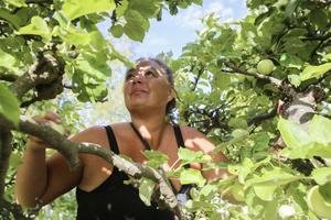 Camilla Freedman plockar äpplen hemma i föräldrarnas trädgård i Östertälje. Lite senare blev det leverans till musteriet för att få egen dryck från egen trädgård.