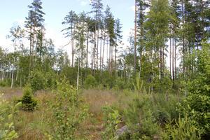 I det här området, ett par kilometer från Storsjöns strand, vill Wiking Mineral börja bryta bly, zink och silver.