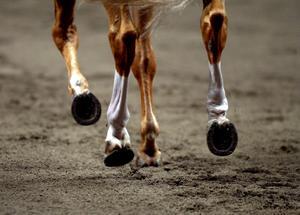 Kingen har en hästhandlare i släkten som kanske tog sitt fulla ansvar för sina gärningar.