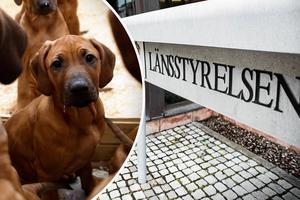 Bilden är en genrebild och hundarna på bilden är inte samma som skrivs om i texten. Foto: Christian Larsen