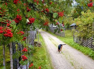 Anders Åkerlund påminde också om jägarkulturens nära relation mellan människa och hund.