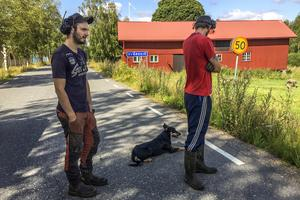 När tidningen kommer på besök i Svärdsjö har Bettan rymt igen. Erik Westman och Emrik Forssén tar hjälp av hunden Tuula för att valla in Bettan igen.