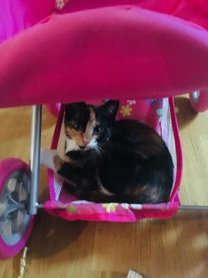 202) Här är Luna - vårt senaste tillskott i familjen. En helt fantastiskt söt och social kattunge med stark personlighet och full i bus. Foto: Emma Nilsson