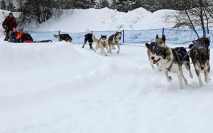 Det var full fart på banan vid Medborgarhuset då 120 barn från Norra skolan fick prova på en sväng i hundspann.Foto: Niklas Andersson