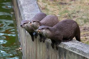 Familjen var i lördags på If-metalls familjedag på Parken Zoo i Eskilstuna och där fanns många fina och roliga djur!