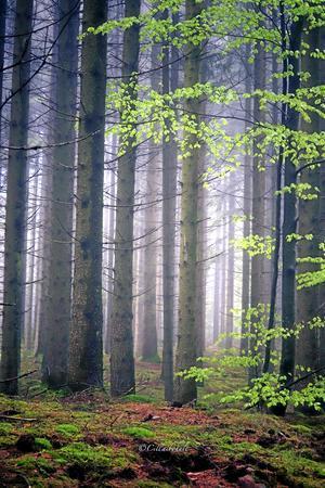 Skogen när den är som vackrast.