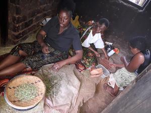 Här tillagas stekta gräshoppor i kryddor och olja, vilket är ett vanligt snack i Tanzania med mycket krisp.