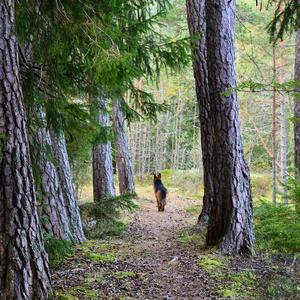 Vackra och jag på en skön promenerad vid Helgonmossen. Foto: Gunilla Östman