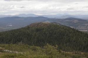 Skog som ligger i kanten av myrar och på branter lämnas ibland obrukad, vilket ger en grogrund för insekter och växter.