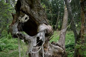 Anna Linnea Liljeholm har ett verk i skogen och kan även ses på vinden till Stora Hyttnäs.