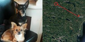 Hundarna Lillan och Dilba blev alldeles förskräckta av jordskalvet.