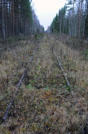 I dag ligger resterna av Inlandsbanan kvar i skogen söder om Vansbro, men inom något år kan det rulla tåg med fisk på rälsen igen, om alla planer går i lås.