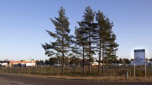 Några träd utanför det södra området blir kvar men annars är träden borta och en ny vy har öppnat sig mellan Terminalvägen och Plåtslagarvägen.