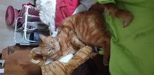 Sune gosar med sin gosedjur-katt. Bild: Kamilla