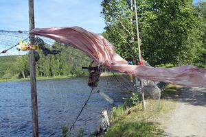 Anette Spjutsvik: Fisk(e)lycka.