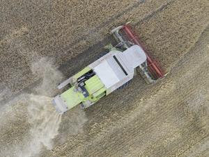 Länets bönder tröskar sig vidare mot målet.