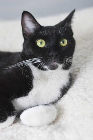 I över två dygn låg katten i en hoptejpad kartong i skogen, utan vare sig mat eller vatten.