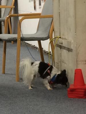 Under lördagen invigde Falu hundsällskap sina nya lokaler i Främby.