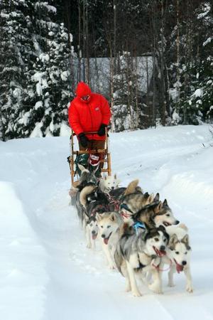 Träningen har skett på hemmaplan för Nina och hennes hundar.
