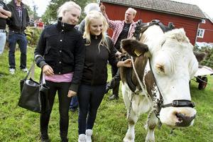 En riktig charmknutte tycker Sara och Linda Blomqvist att oxen Sixten är.