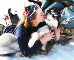 """""""Vi har alltid haft många hundar för jakt och drag. Det får aldrig saknas en stövare i huset och stövaren har alltid extra privilegier jämfört med polarhundarna. Här en bild på vår finnstövartik Ringa –  en """"jaktrobot"""" i skogen och det mysigaste som finns inomhus. Vårt senaste tillskott i hundväg heter Cree och är en Alaskan Malamute som slår det mesta i att se söt ut och vara busig. Att sitta med matte Heidi och fika är lika roligt som att klämma in sig mellan vedhögen och blomkrukan och sova. Slutligen även en bild på vår dotter Heidi med sin ledarhund som heter Tareja, en liten tik av rasen siberian husky, som är hur klyftig som helst och leder hundspannet efter kommandon från Heidi.Här är även en bild på två av siberian husky-tikarna i spannet, Festis är den lilla gråa och Tareja den svart-vita. Hur söta som helst!""""Foto: Christl Kampa-Ohlsson, Mörsil."""