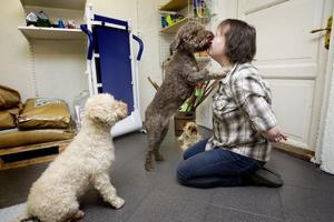 Hundträning. Hundpsykologen Camilla Westerlund har en lekstund tillsammans med lagottohundarna Sinna, Doris och lilla yorkshireterriern Maggan som också kan säga mamma.Foto: Margareta Andersson