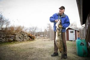 Helge Zetterström fick en gädda på 17,5 kilo, fångad i Rällsjön mellan Bjursås och Rättvik.