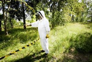 Rätt klädsel. I Gästrikland finns i dag runt 100 biodlare. Det kan låta mycket, men de var många fler förut. En av dem är Matias Köping. Här ute på sin gård klädd i en vit dräkt som han tvingas                             ha på sig när han sköter om sina bin.
