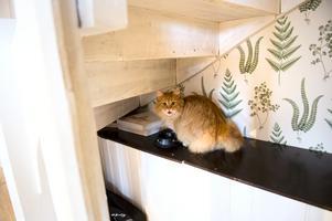 Katten kaktus har sin matskål under trappen.